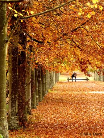 amoureux_d_automne1